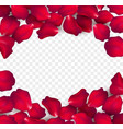 falling red rose petals isolated on white vector image vector image