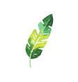 green tropical banana leaf hand drawn watercolor vector image