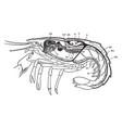 lobster organs vintage vector image vector image