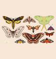 set moths and butterflies vector image vector image