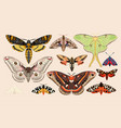 set of moths and butterflies vector image vector image