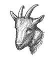 drawn head goat farm animal vector image