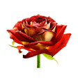 realistic wet red rose isolated on white vector image vector image