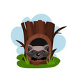 cute raccoon sitting in hollow of tree hollowed vector image