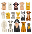 different funny dogs in cartoon style isolated vector image vector image