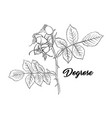dogrose or wild briar rose rosehip outline black vector image