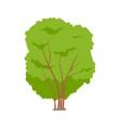 isolated tree or tall shrub cartoon icon vector image vector image