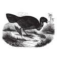 mound bird vintage vector image vector image
