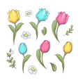 set flowers tulips hand drawing vector image vector image