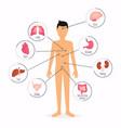 human body with internal organs human body health vector image