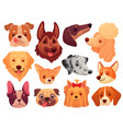 cute dog face puppy pets dogs animals breed vector image vector image