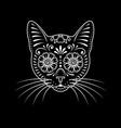 ornamental cat portrait on black vector image vector image