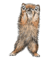 Pomeranian vector image vector image