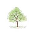 tree with leaves summer nature sign floral forest vector image vector image