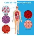cell human body poster vector image vector image