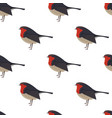 robin bird seamless pattern vector image vector image
