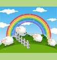 background scene farm with sheeps and rainbow vector image