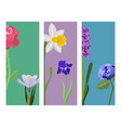 beautiful spring flower botanical bloom painting vector image vector image