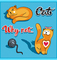 cat playing with a ball and sleeping cat vector image vector image