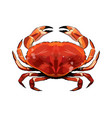 red crab from a splash watercolor colored vector image vector image
