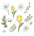 set flowers tulips hand drawing vector image