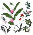set of beautiful tropical flower and leaves vector image