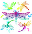 set of color dragonflies vector image