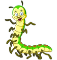 caterpillar millipede vector image