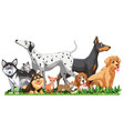 cute different dogs group isolated vector image vector image
