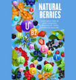 healthy vitamins in natural forest berry fruits vector image