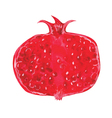 Watercolor pomegranate vector image