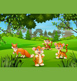 wild animal playing in jungle vector image vector image