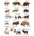 animals of eurasia vector image vector image