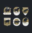 bulls and buffalo vector image
