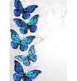Design with Blue Butterflies Morpho vector image
