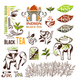 Indian green and black tea logo collection vector image