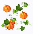 set of pumpkins with leaves solated on the white vector image vector image
