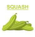squash isolated on white background vector image vector image