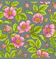 wild rose flowers pattern vector image vector image