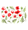 hand drawn poppies set vector image