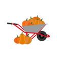 pumpkin harvest vector image vector image