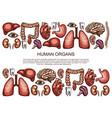 human organs sketch body anatomy poster vector image vector image