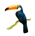 Toucan Sitting On Twig Realistic Image vector image vector image