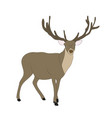 deer lies vector image