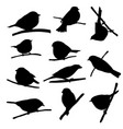 birds at tree branch vector image vector image