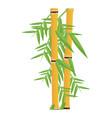 fresh bamboo leaves botanical zen forest tropical vector image vector image