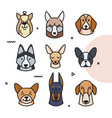 a head different breeds vector image vector image