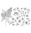 collection set of lilac flower and leaves drawing vector image vector image