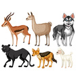 Different kind of wildlife vector image vector image