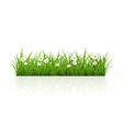 Summer grass vector image vector image